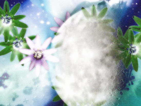 g475424_flowers2.jpg